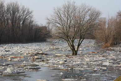 flood20003