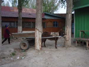 burro-and-cart