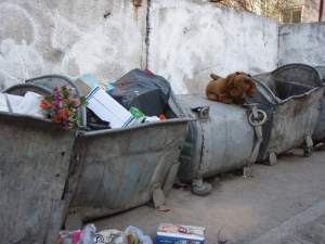 doggie-on-garbage