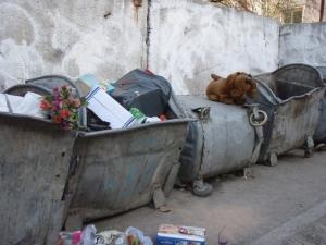 doggie-on-garbage