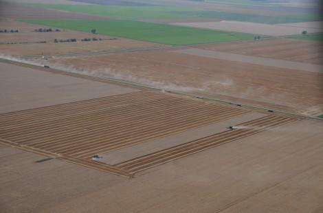 grain harvest